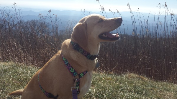 Let her off leash for a picture on the Blue Ridge Parkway? Nope. I'll never see her again. / After the Knot
